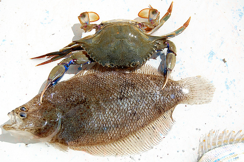 Blue Crab and Flounder