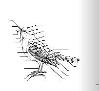 Notebookingbirds